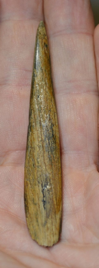 "An Extremely Rare Upper Paleolithic ""Magdalenian"" bone ""Sagaie"" Bevel ended Spear point,France. SOLD"